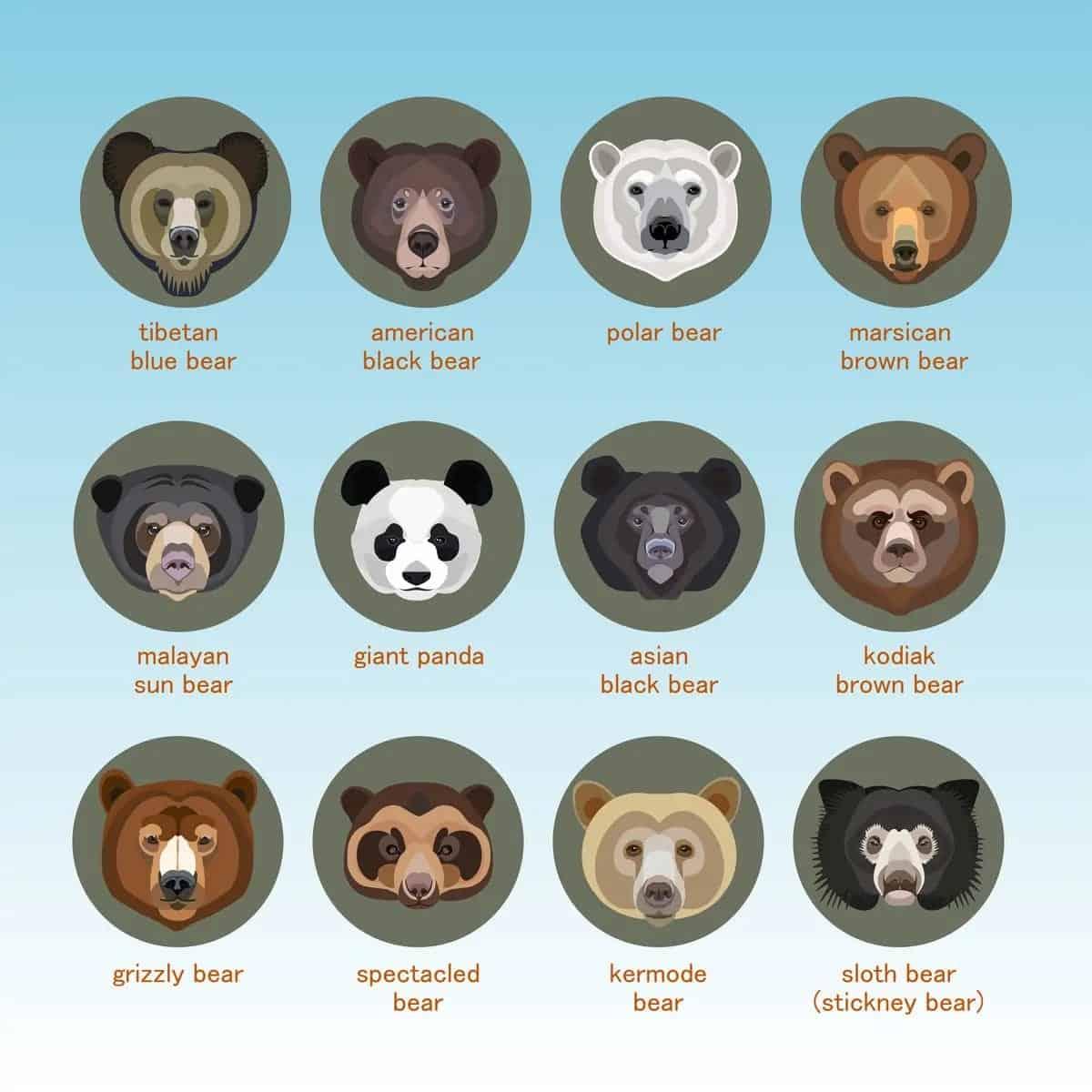 Bear types chart