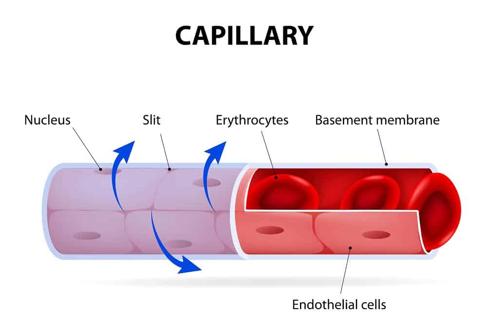 Illustration of the parts of a capillary.