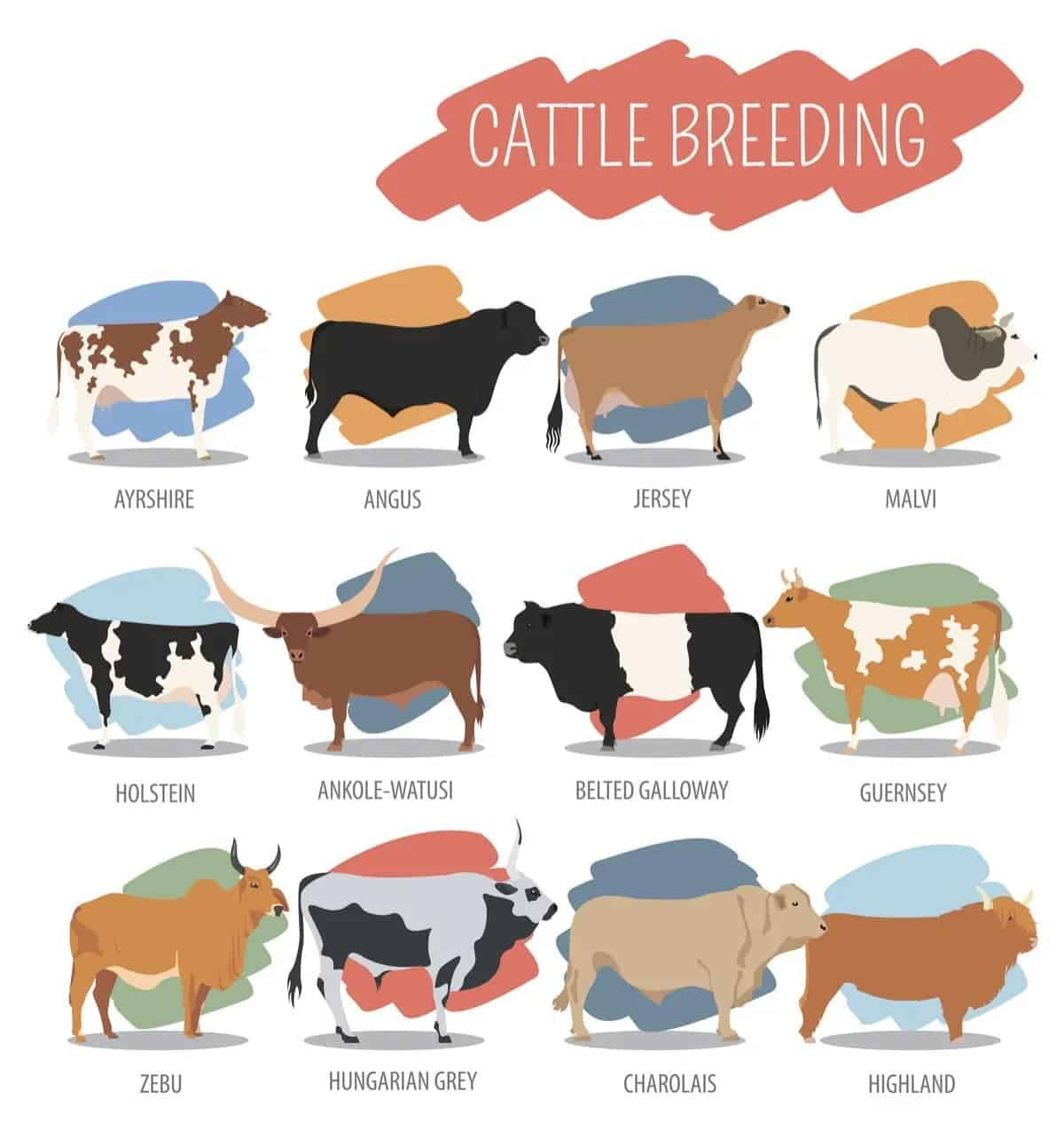 Cattle breeding chart