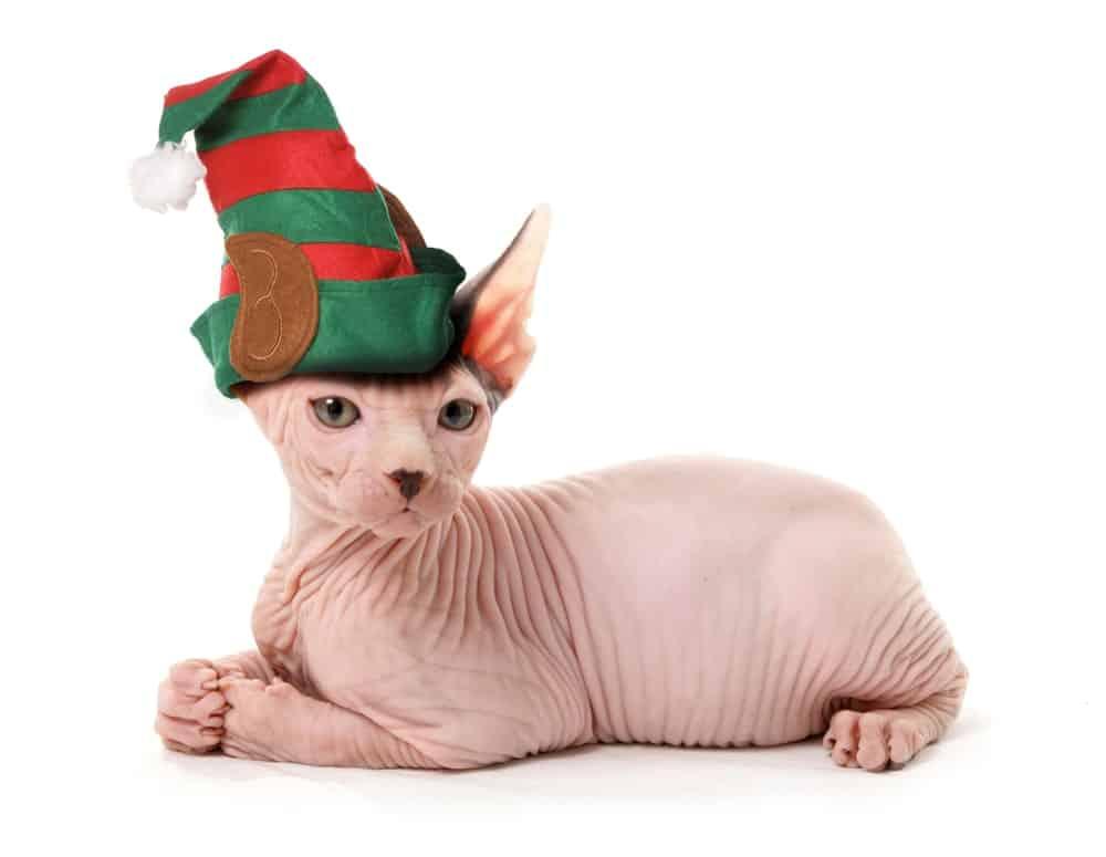Elf cats wearing an elf hat