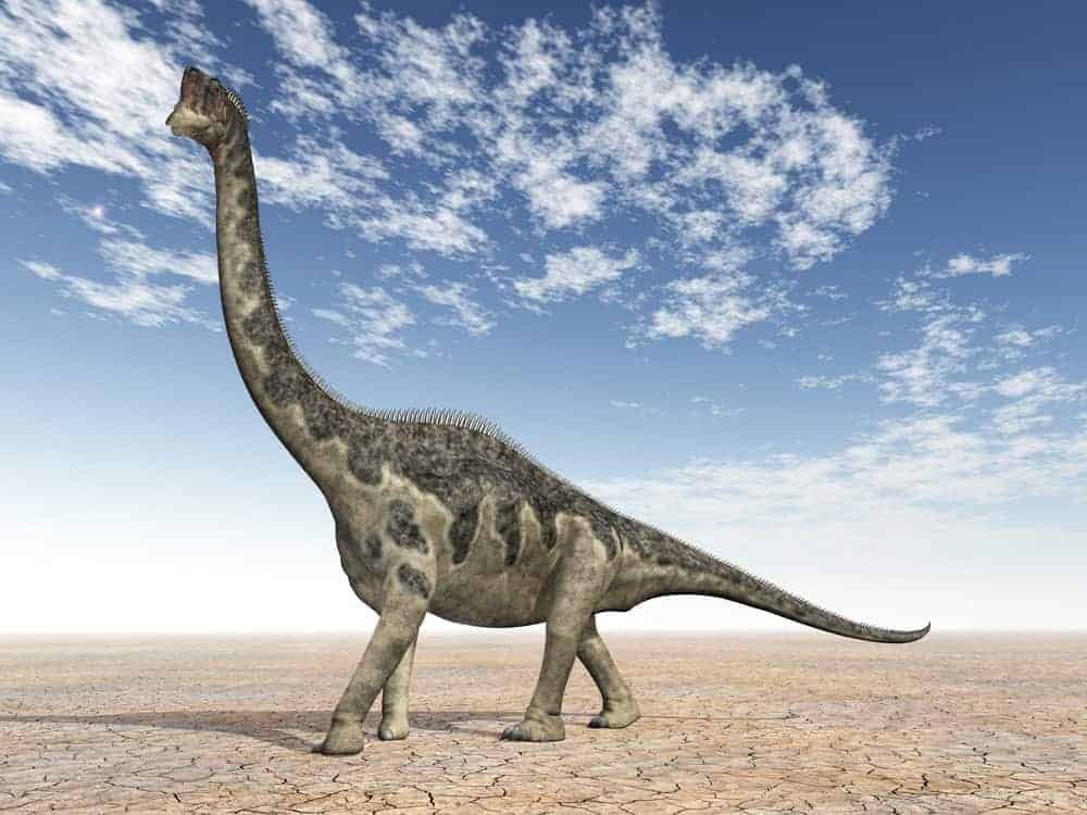 Europasaurus dinosaur walking on a drought land.