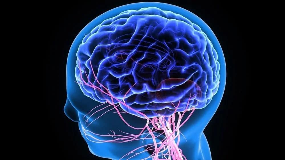 Illustration of the human nervous system.