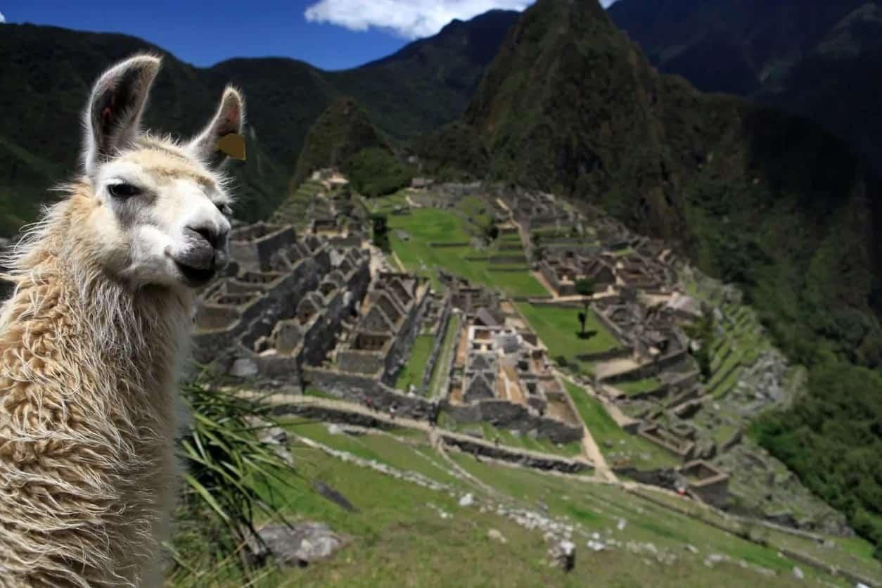 Llama selfie with Macchu Picchu.