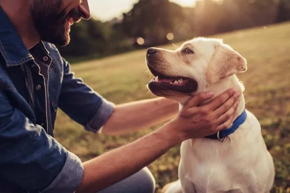 Man patting a dog