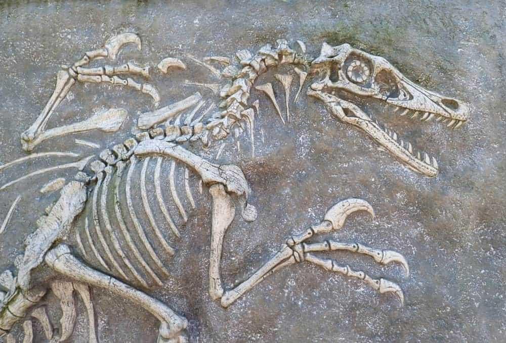 Fossil of a dinosaur