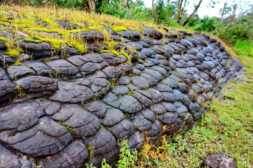 Solidified pillow lava with some vegetation.