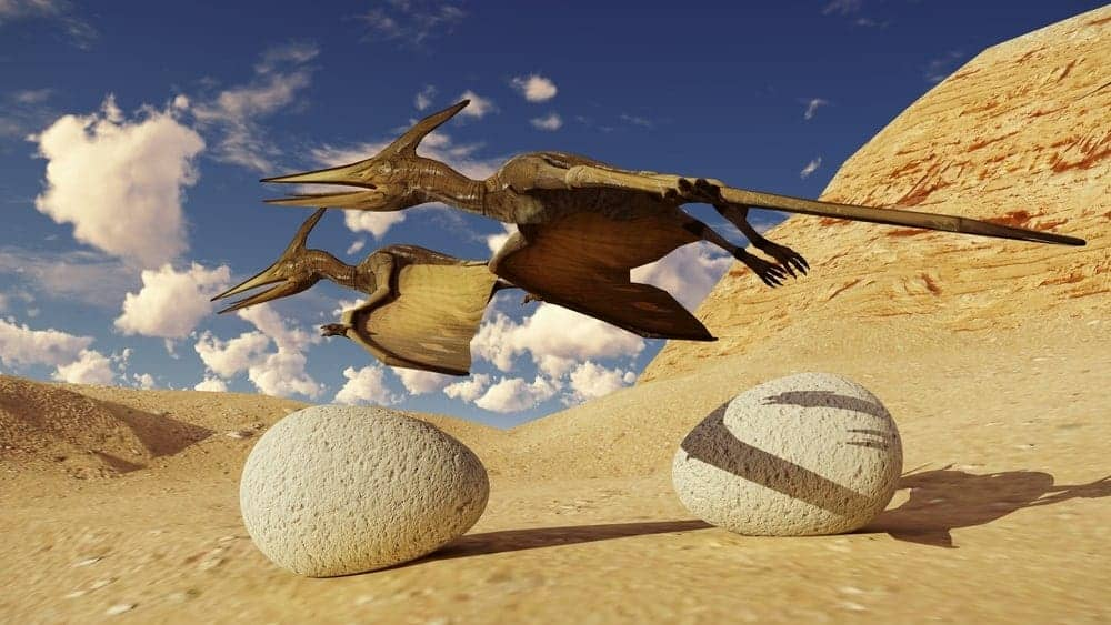 Two Pterodactyls flying above the eggs.