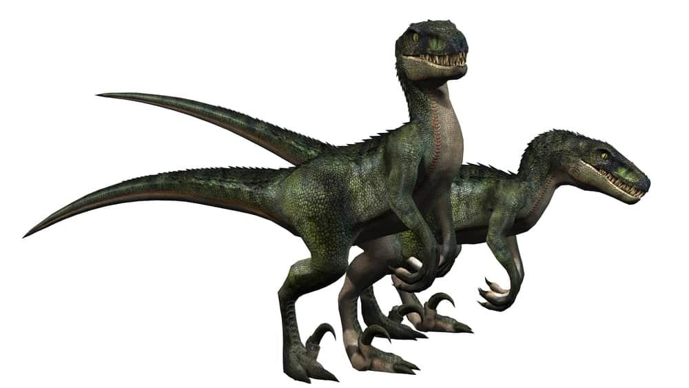 Raptorex dinosaurs