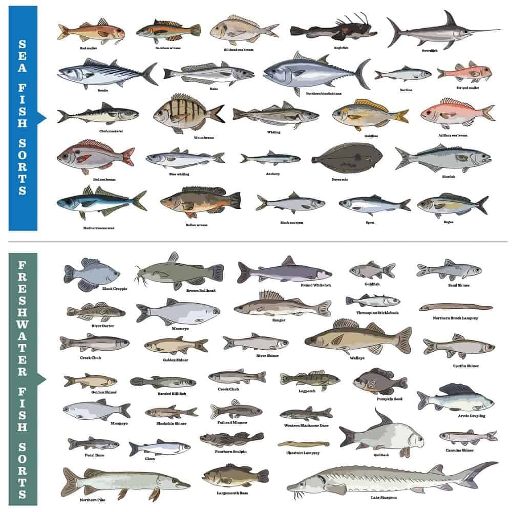 Saltwater and freshwater fish charts