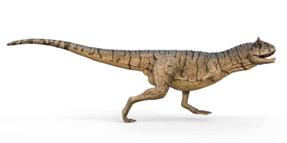 Tsintaosaurus dinosaur