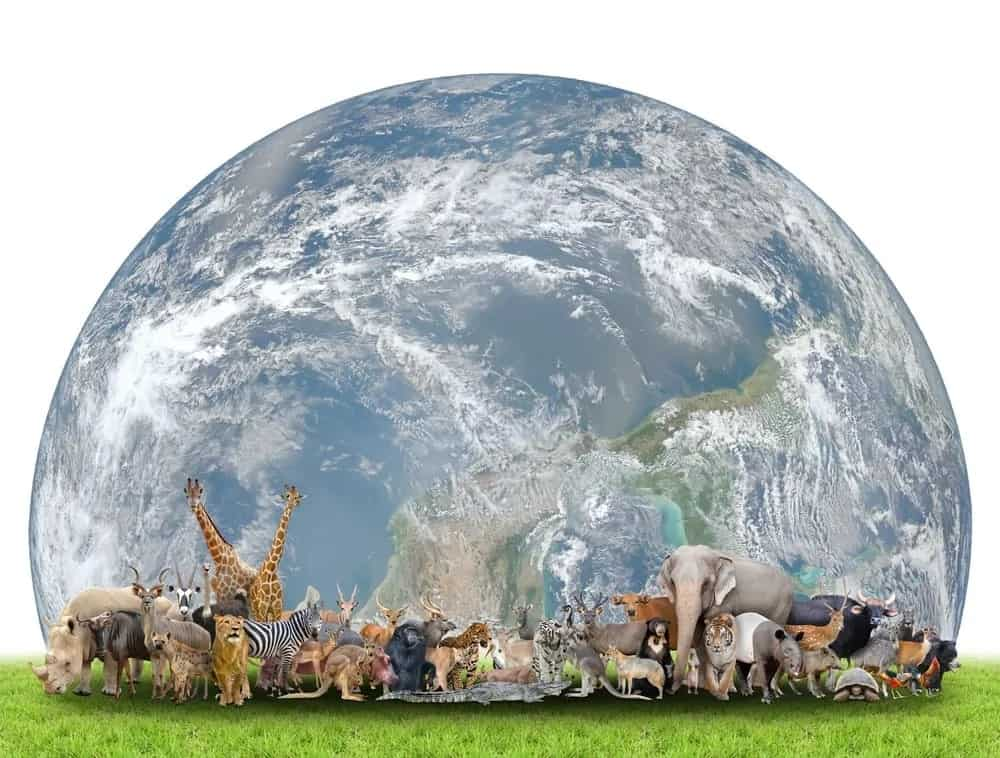 Different animal types against the earth backdrop.