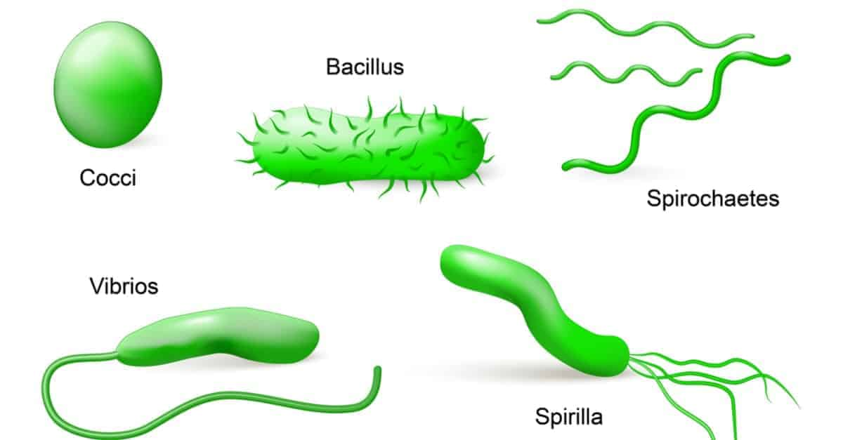 Types of bacteria according to shapes illustration