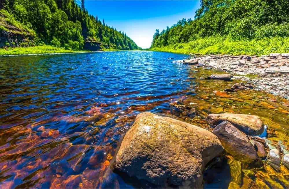 Crystal clear river nestled in between the lush forest.
