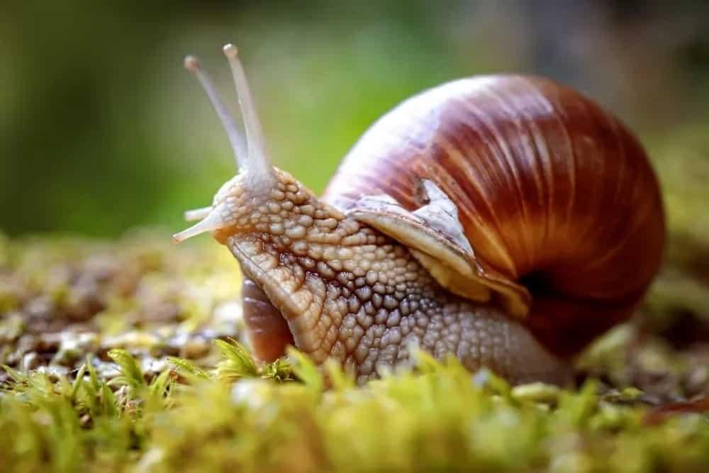 Closeup shot of a snail on the grass.