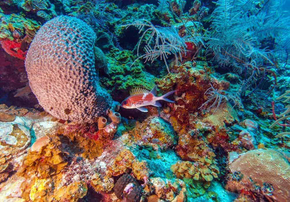 Cayo coral reef