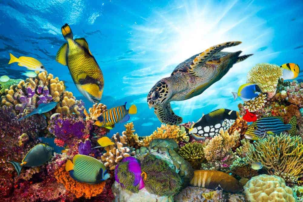 Beautiful coral reef with various types of fish and a turtle.