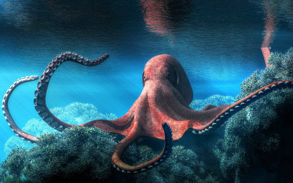 Finless octopus under shallow waters.