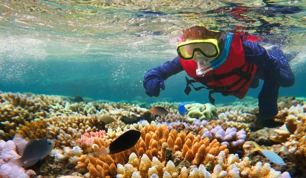 A man snorkeling in the Great Barrier reef.