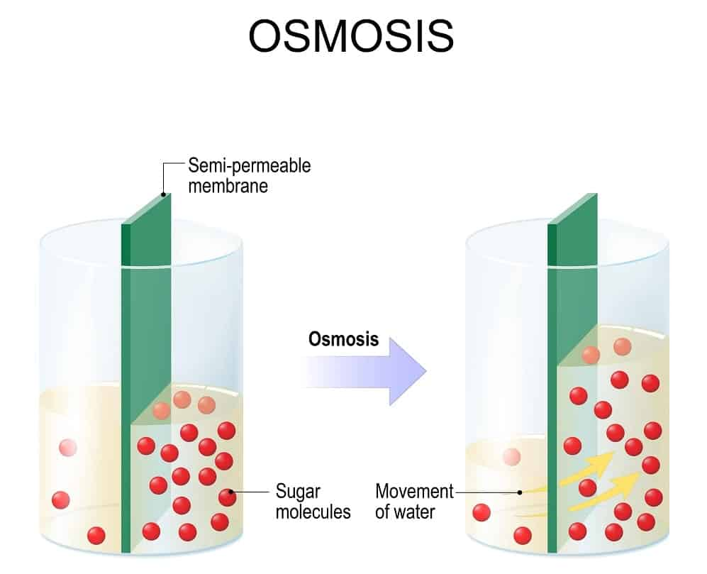 Illustration of Osmosis.