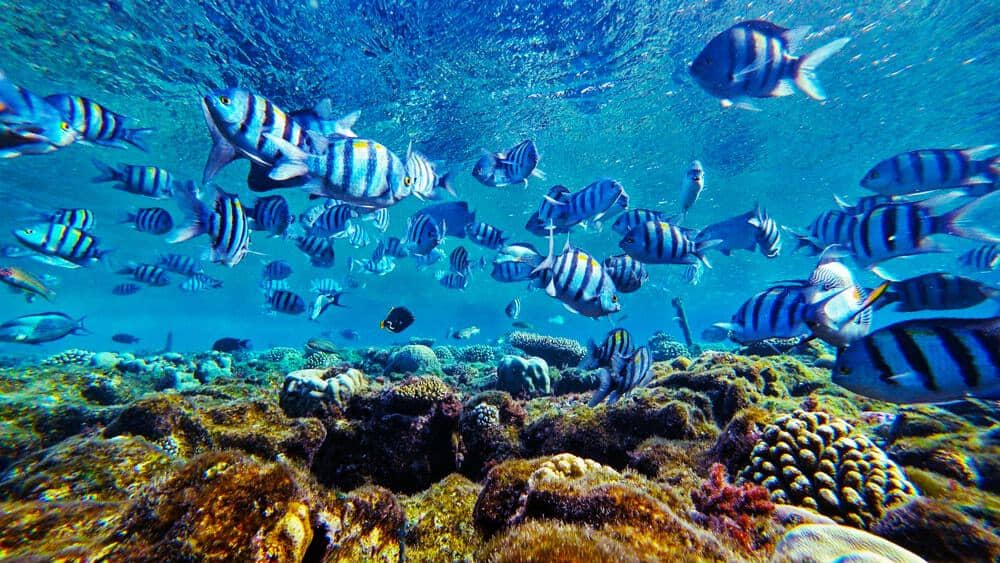 School of fish in Red Sea coral reef.