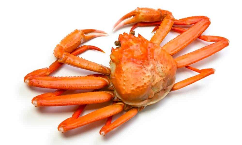 Rock (Snow) Crab