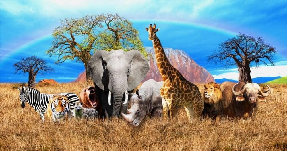 Three Types of Mammals