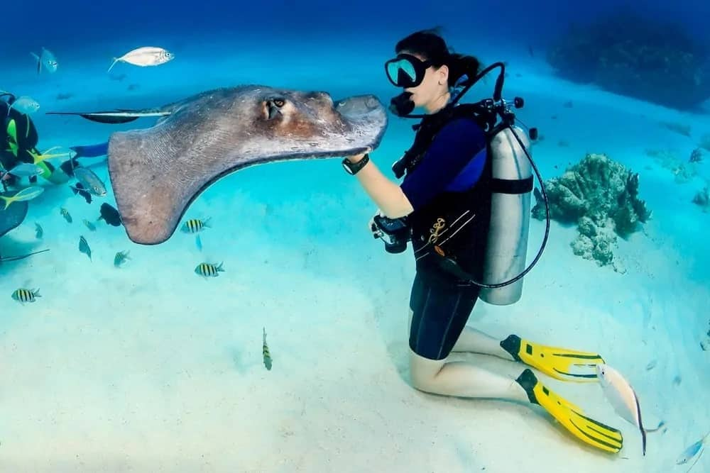 Woman holding a stingray under the ocean.