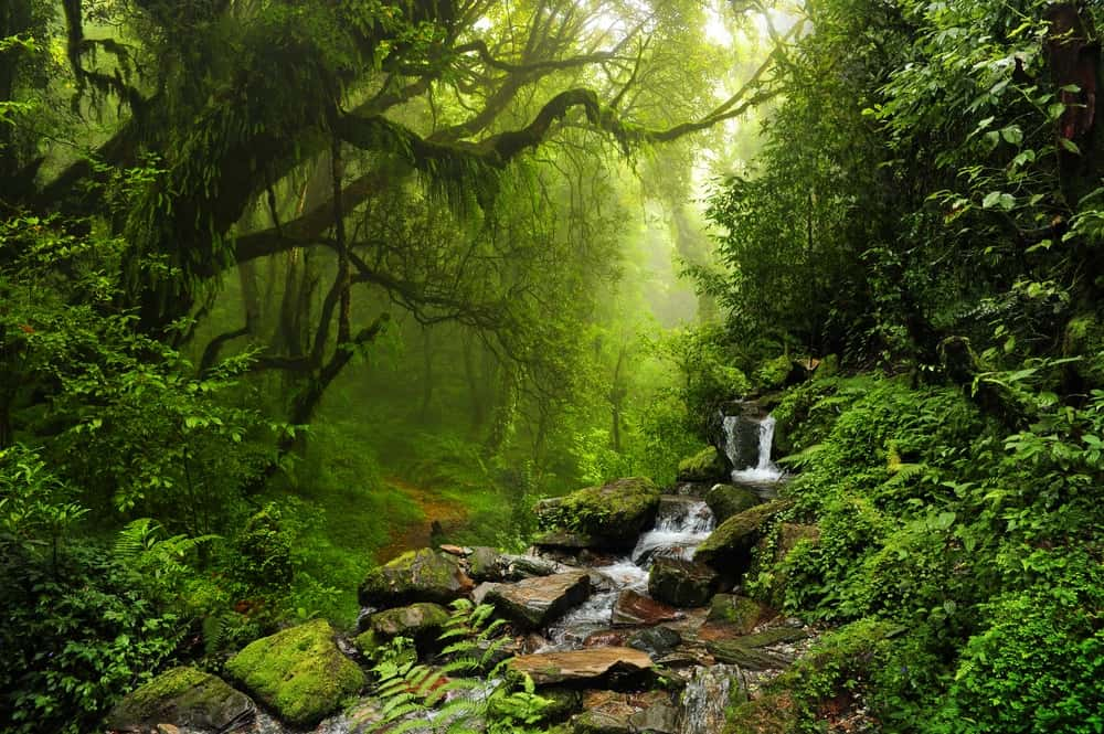 A close look at the subtropical forest in Nepal.