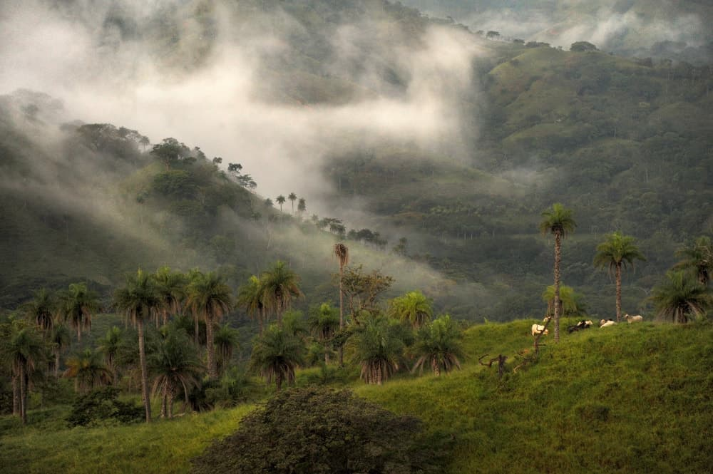 The misty mountains of the Monteverde Cloud Forest Reserve.