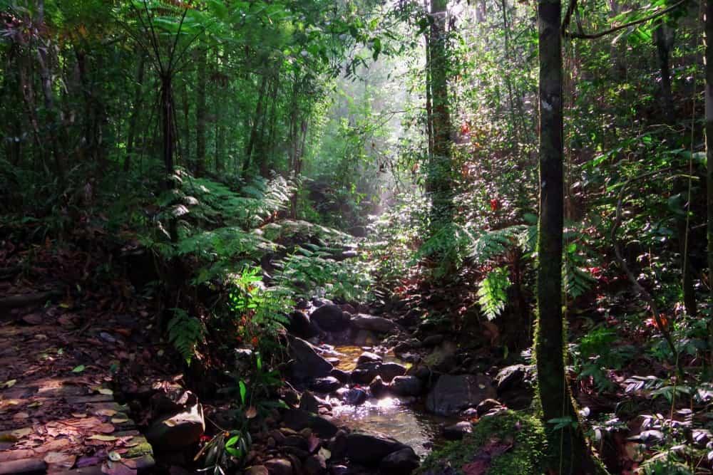 A look deep inside Sri Lanka's Sinharaja Forest Reserve.