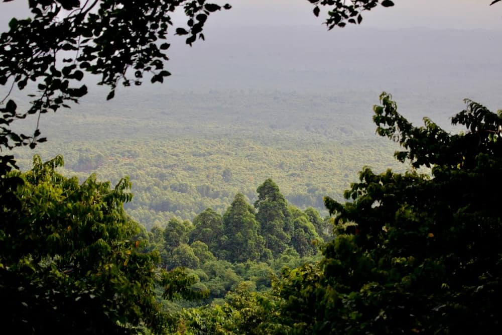 A sweeping view of the massive African Congo rainforest.