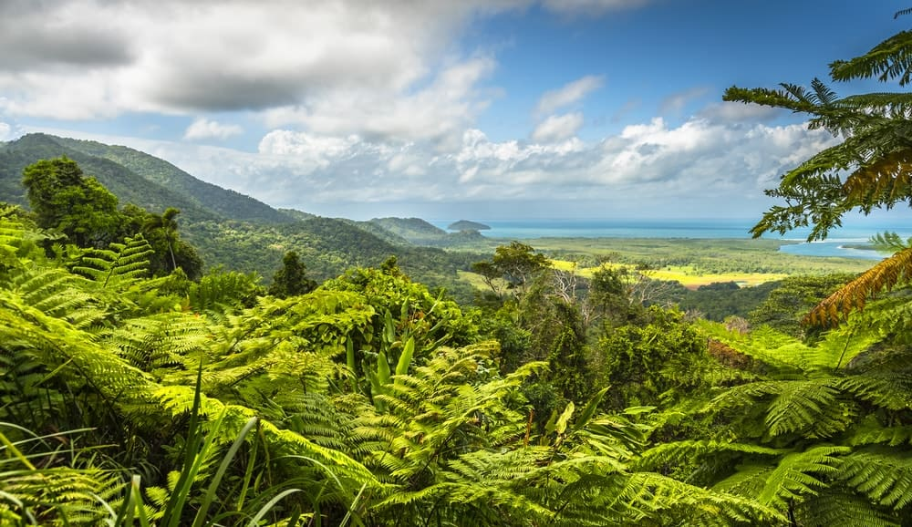 A sweeping look at the Daintree Rainforest.