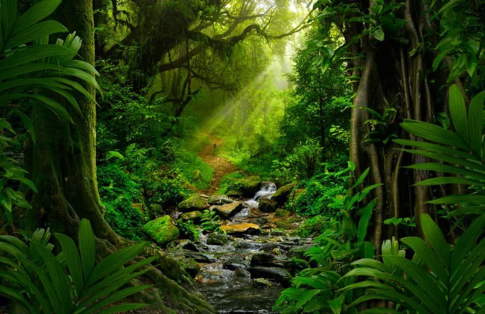 Deep inside the Southeast Asian Rainforest.