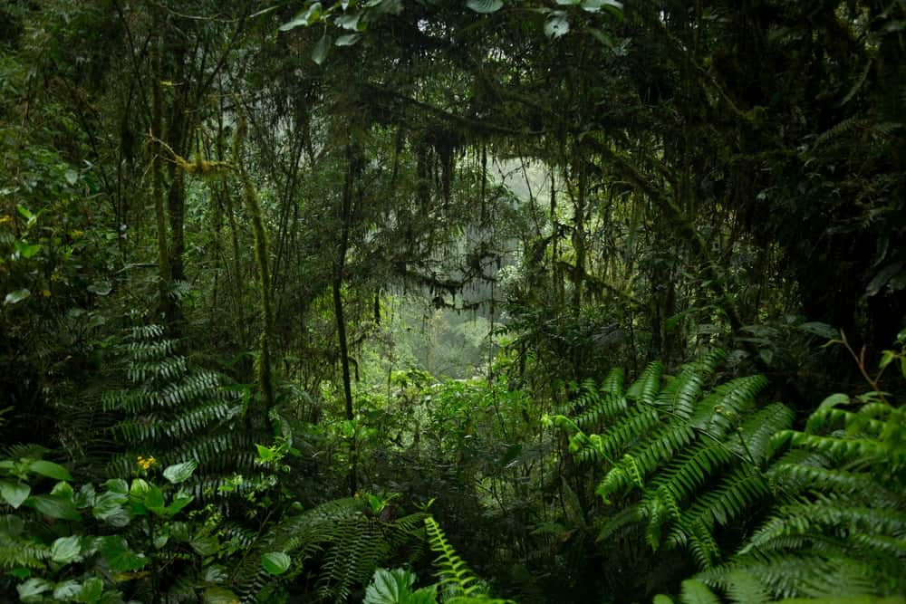 A look at a jungle with a thick vegetation of plants.