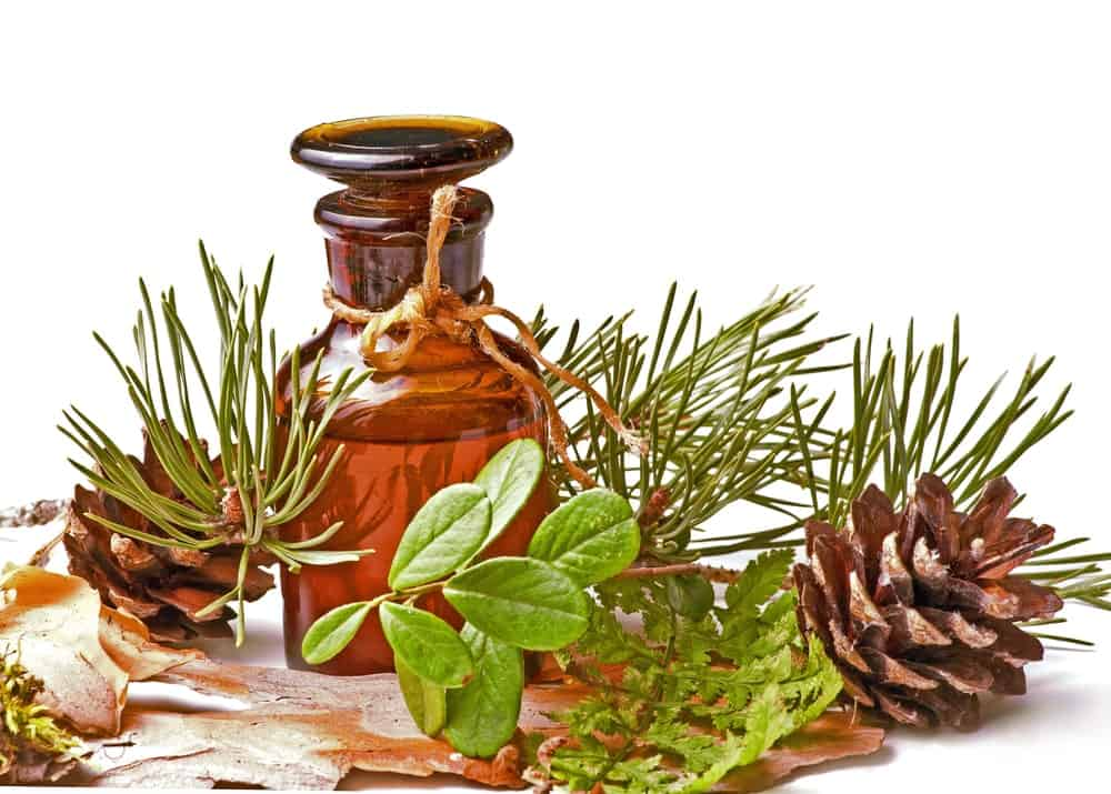 A bottle of oil surrounded by herbs and conifer cones.