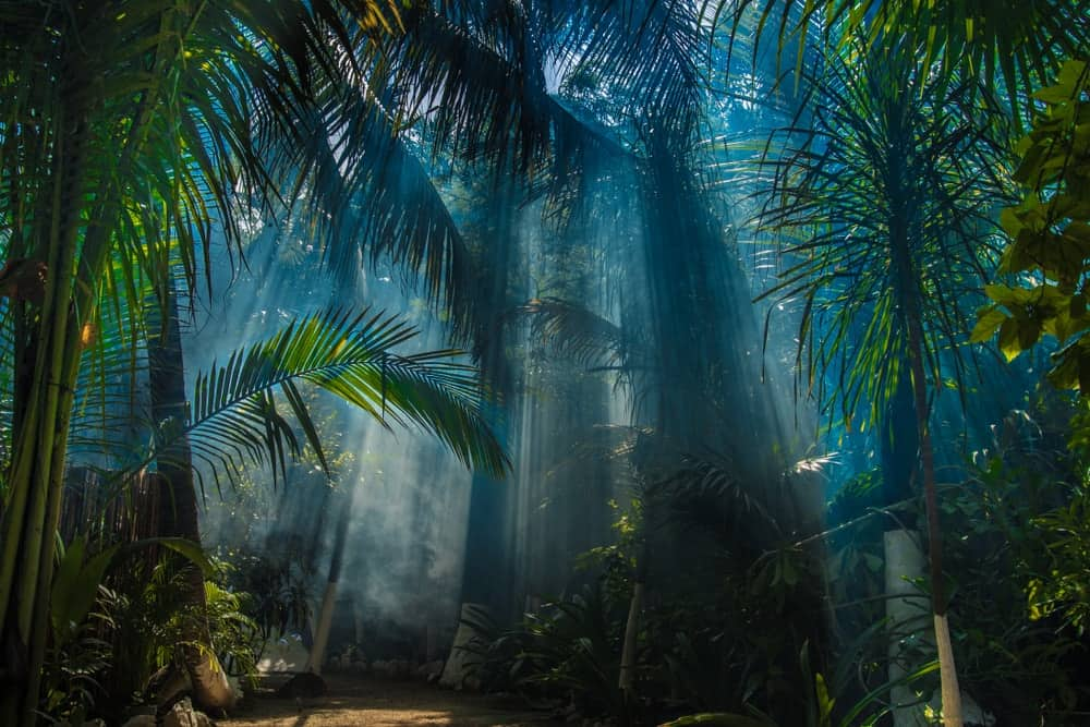 A tropical jungle lit with sunlight beams.