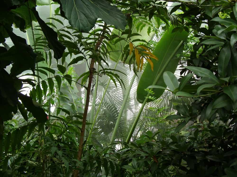 A close look at a jungle's thick vegetation.