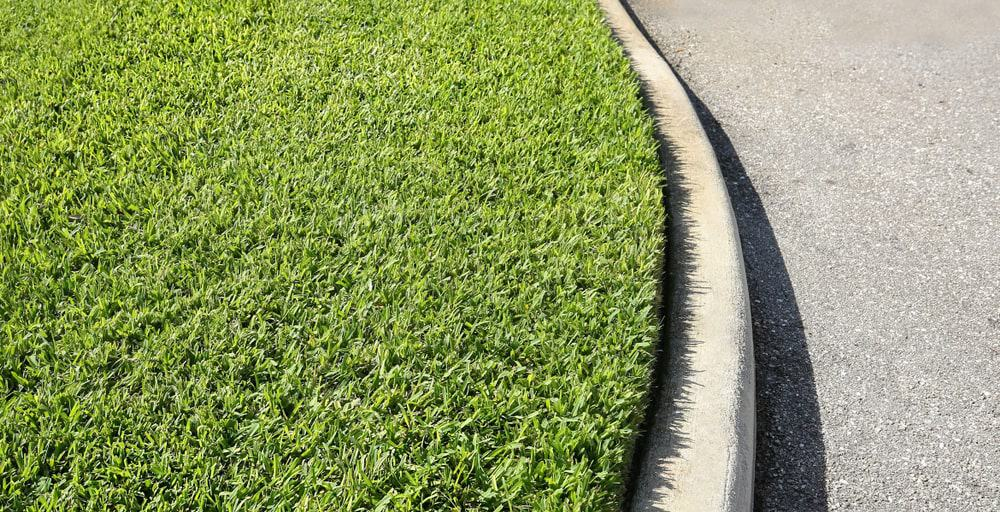 St. Augustine grass growing close to the curb.