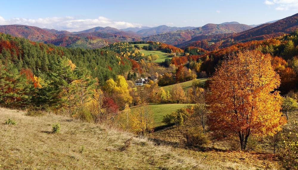Temperate forest during autumn.