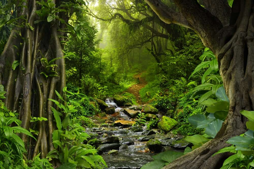 Tropical forest with stream.