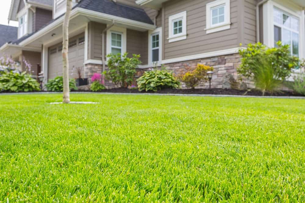 Nicely trimmed front yard with green grass in front of a house.