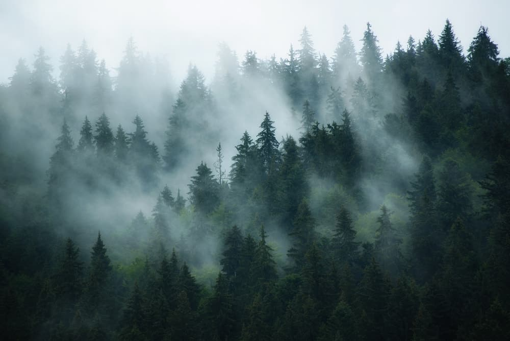 An aerial view of a foggy forest.