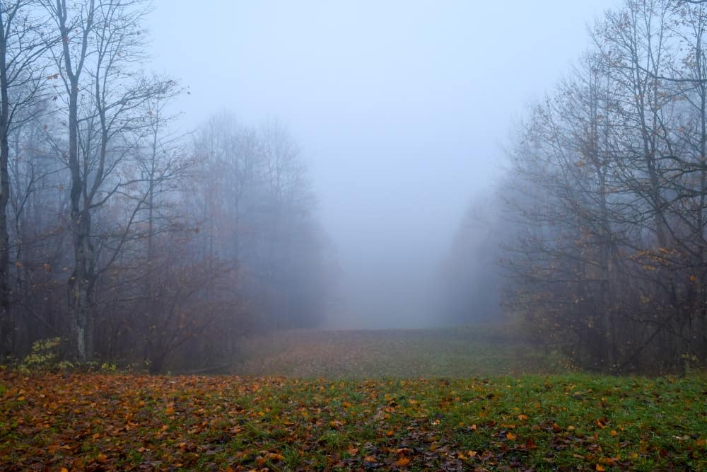 A foggy autumn day in the forest.